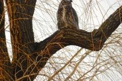 The neighborhood owl.